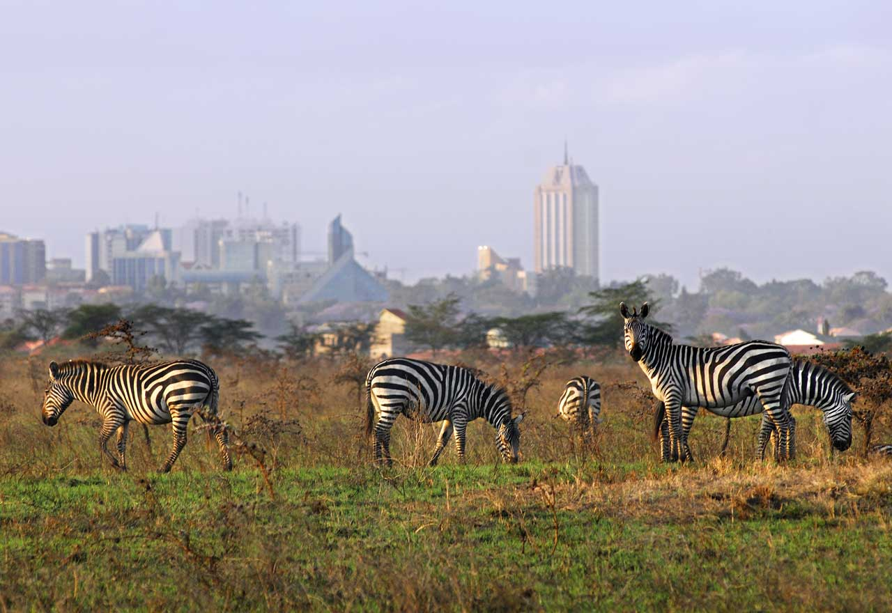 Nairobi National Park Zebras with Nairobi skyline in the background